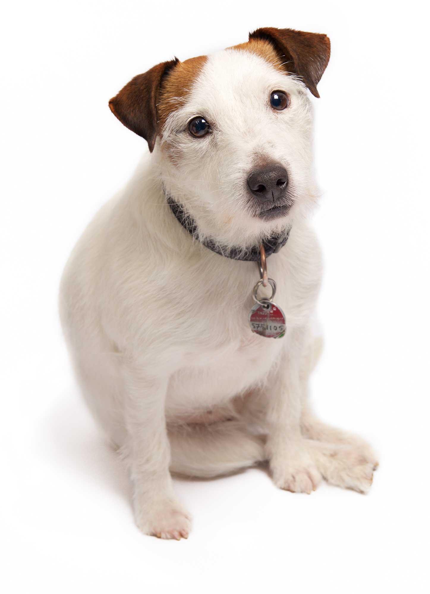 Agenturhund Coco